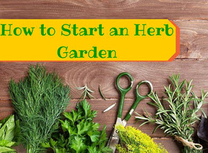 Grow Your Own Herb Garden