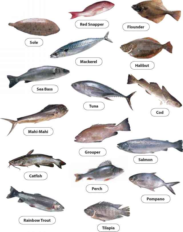 Examples Round Fish
