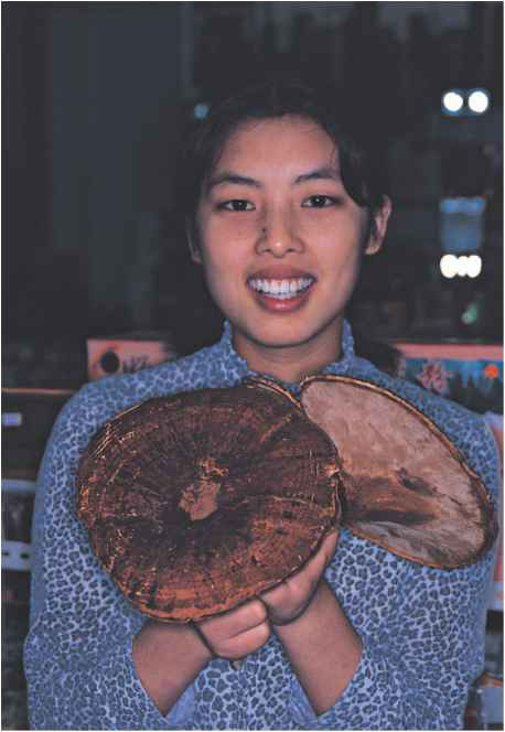 Edible Wild Mushrooms Hong Kong
