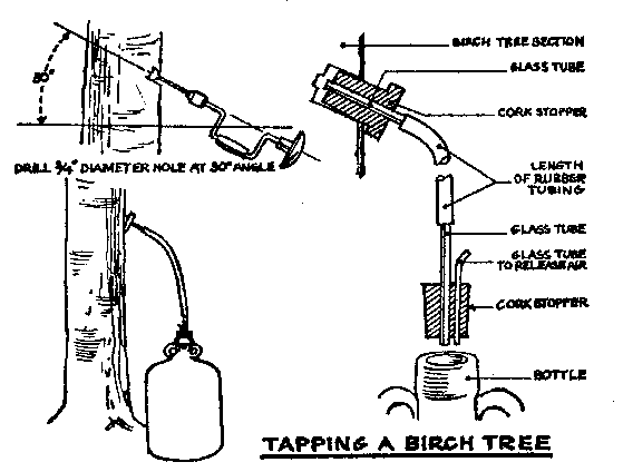 what yeast do you use for birch sap wine